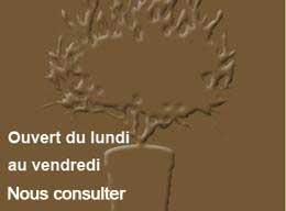 Pépiniériste conseils et vente olivier de provence en pot